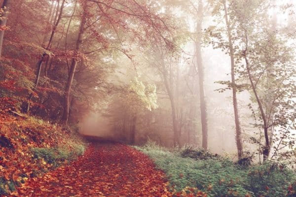 Herbstausflüge