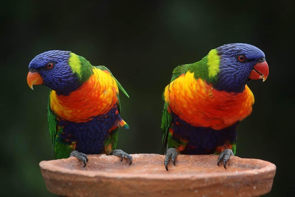 Tierdokumentationen im Stream – mit OLED lebensecht wie nie.